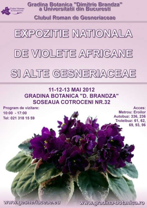 Expozitia de violete africane si alte gesneriaceae